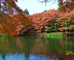 軽井沢,ペット,宿泊,レジーナリゾート軽井沢御影用水